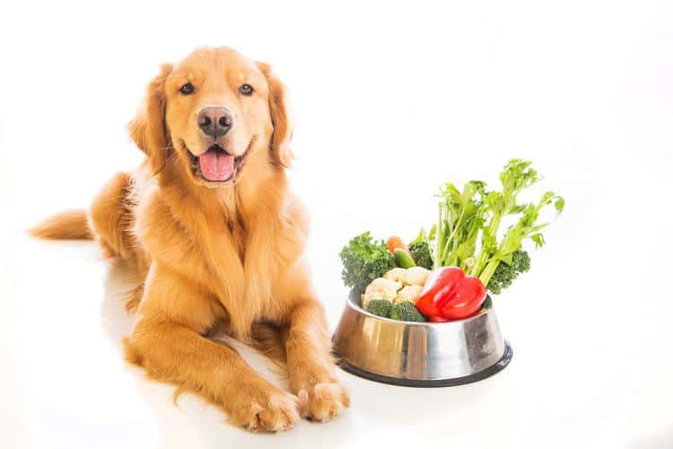 Finding the Best Dog Food