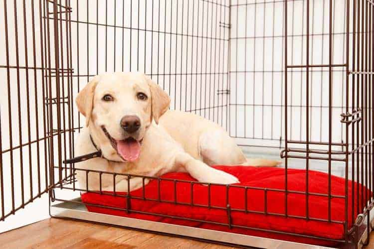The 50 Best Large Dog Crates of 2019 - Pet Life Today