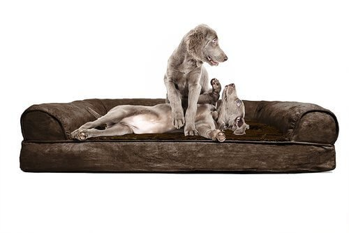 furhaven orthopedic dog sofa bed pet bed