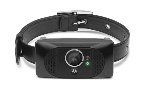 Motorola SCOUT5000 Wearable HD Pet Camera with GPS Tracking