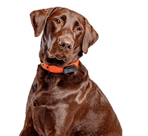 Nuzzle Pet Activity and GPS Tracker Collar