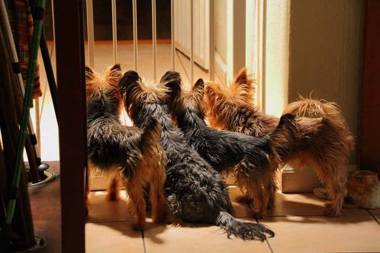 The 25 Best Indoor Dog Gates Of 2019 Pet Life Toda