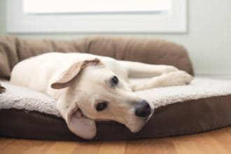 The Best Large Dog Beds
