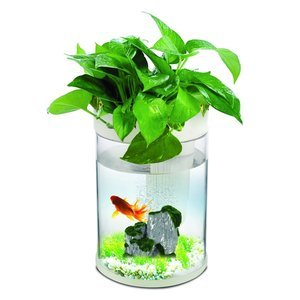 petbob Aquaponic Transparent Aquarium