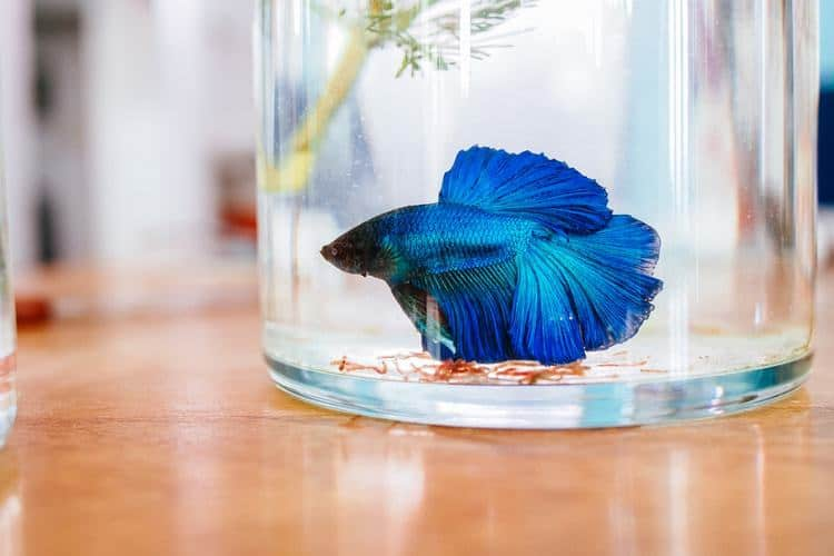 The 25 Best Betta Fish Tanks of 2019 - Pet Life Today