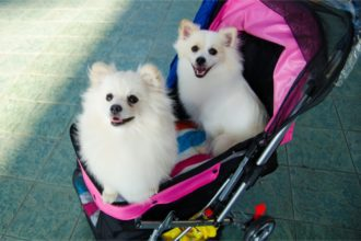 The Best Dog Strollers