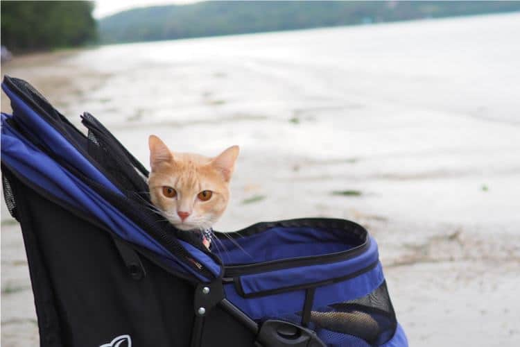 The 50 Best Cat Strollers Of 2019 Pet Life Today