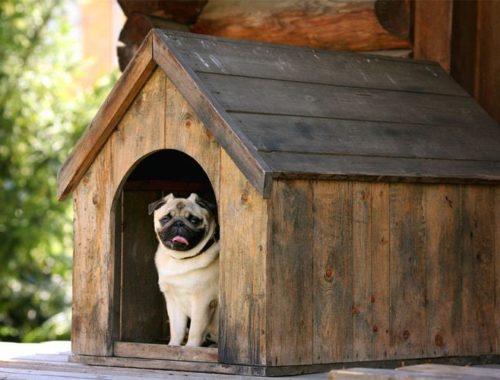 TENT PEG ALUMINUM 12 INCH VERY GGOD CONDITION CAMPING DOG PEN FLE MARKET 50