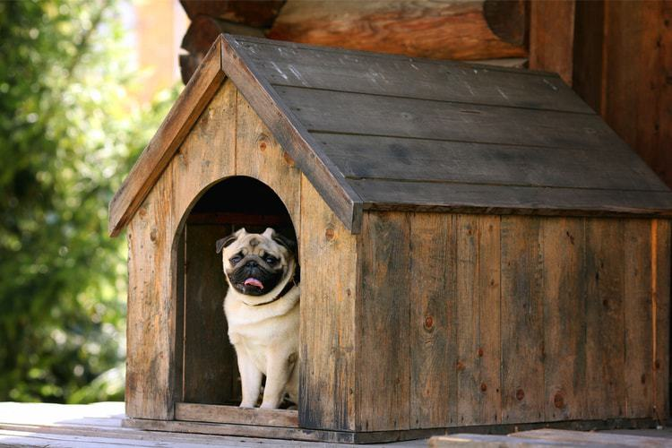 The 50 Best Outdoor Dog Houses Of 2019 Insulated Heated More