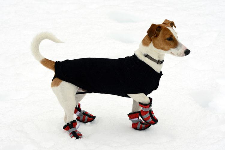 83e03688375d The 50 Best Dog Boots of 2019  Winter