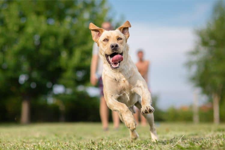 Can You Give Your Dog Probiotics