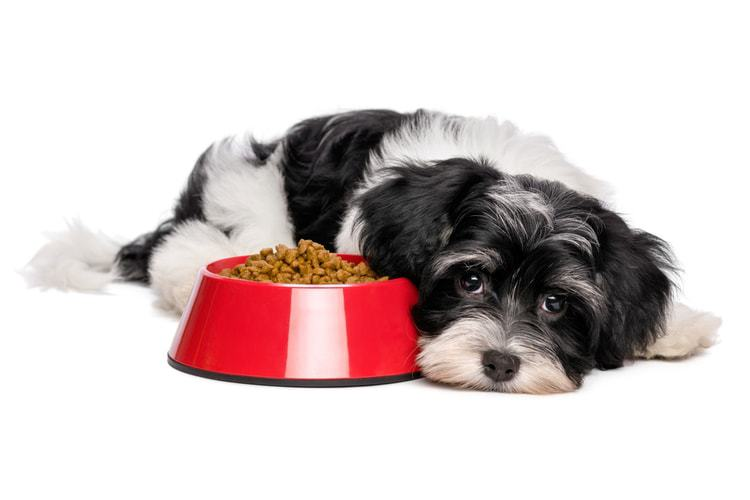 The 51 Best Dog Foods for Allergies in 2019 - Pet Life Today
