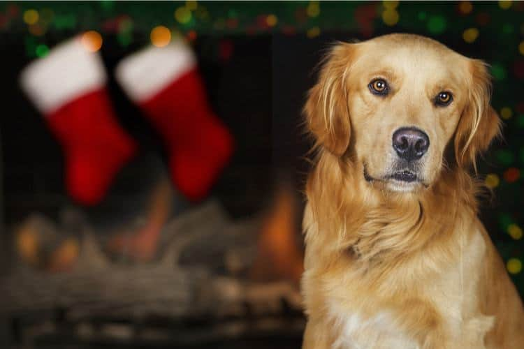 5618ca9d7175d The 50 Best Dog Stockings of 2019 - Pet Life Today