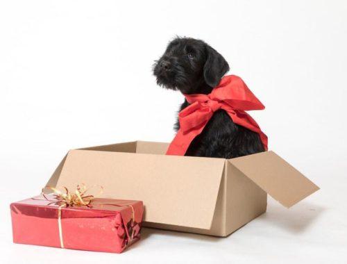 Select Gifts I Love My Dog Silver-Tone Cufflinks Russian Spaniel