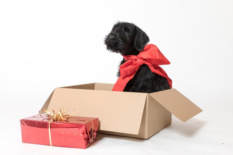 884e96034 The 53 Best Gifts for Dog Lovers of 2019 - Pet Life Today