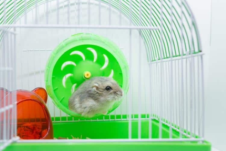 on sale official site check out The 50 Best Hamster Cages of 2019 - Pet Life Today