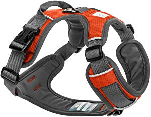 Adventure Dog Harness by Embark Pets
