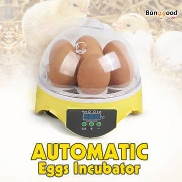 Kyz Kuv EU Automatic Eggs Incubator Mini