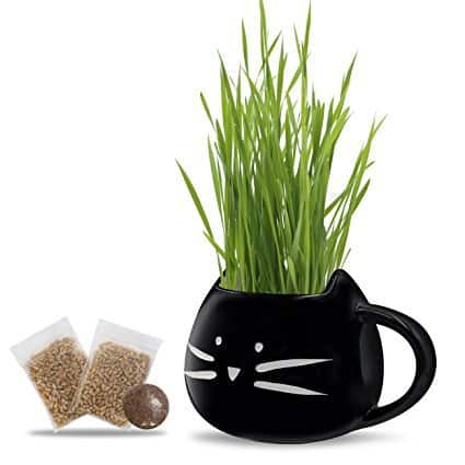 Koolkatkoo Black Cat Kit