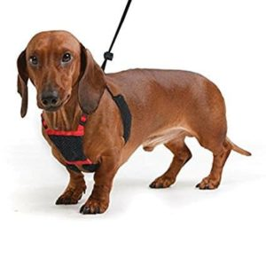 Sporn Non Pulling Dog Harness
