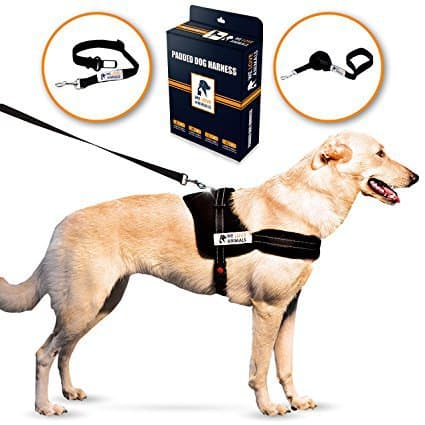 WE LOVE ANIMALS Padded Dog Harness Set