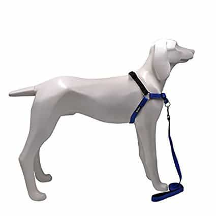 SCENEREAL No Pull Best Dog Leash Harness
