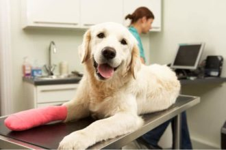 Pet Insurance 101: Guide to Buying Pet Health Insurance