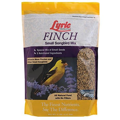 Lyric Finch Small Songbird Wild Bird Mix