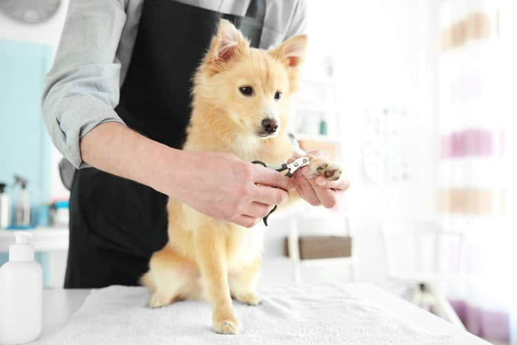 The 50 Best Dog Nail Trimmers 2019 Clippers Files More Pet Life
