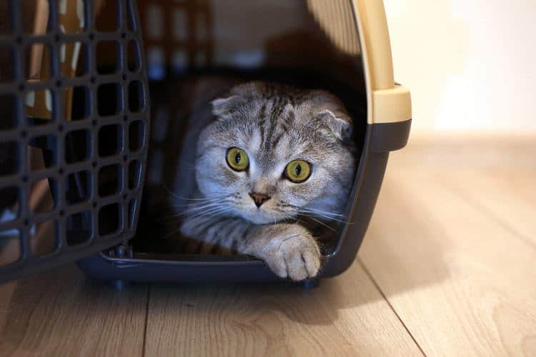 47a7c41684 The 50 Best Cat Carriers of 2019 - Pet Life Today