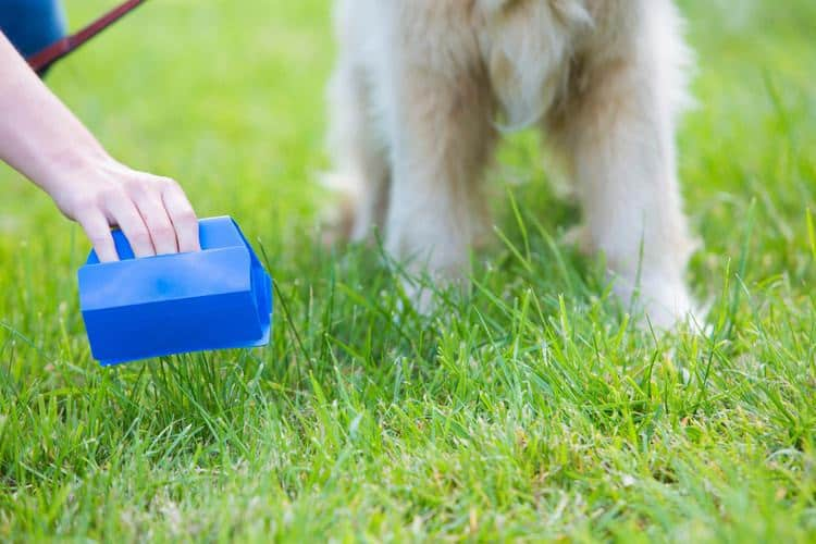 The 50 Best Dog Pooper Scoopers of 2019 - Pet Life Today