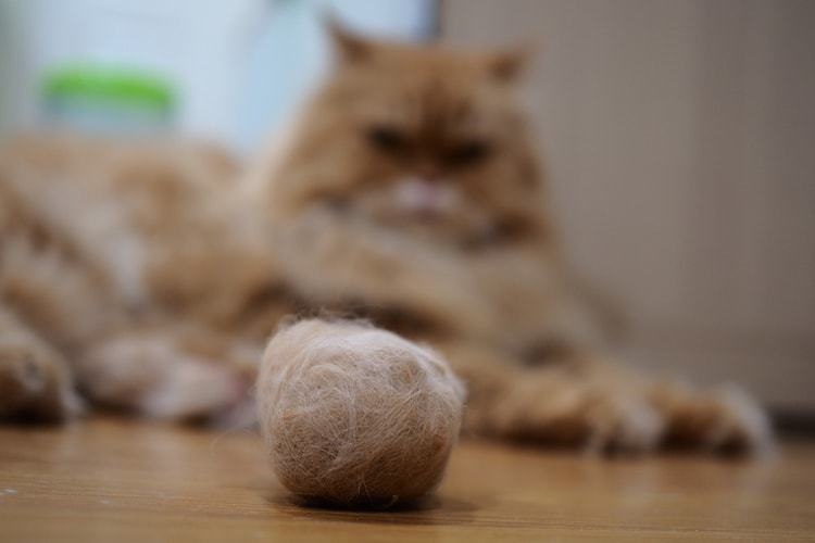 The 50 Best Hairball Remedies For Cats In 2019 Pet Life Today