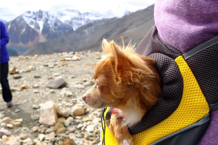 dog carriers for hiking