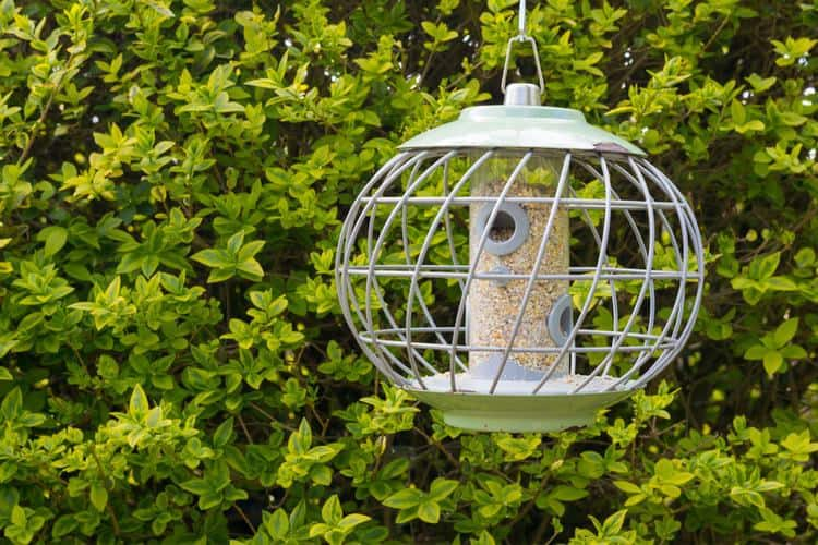 precariously keep how of bird feeder branch reaching your from to squirrels keeping out a squirrel thriftyfun