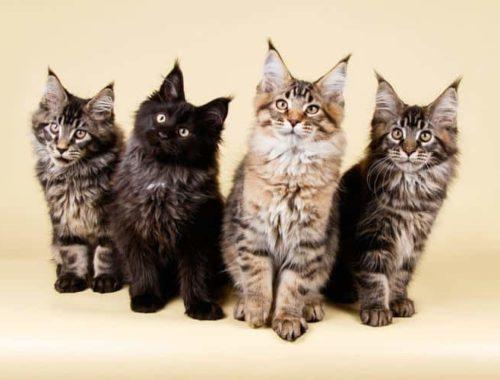 UK MOON NIGHT CAT PENDANT NECKLACE Chain Glass Silver Jewellery Gift Idea Kitten