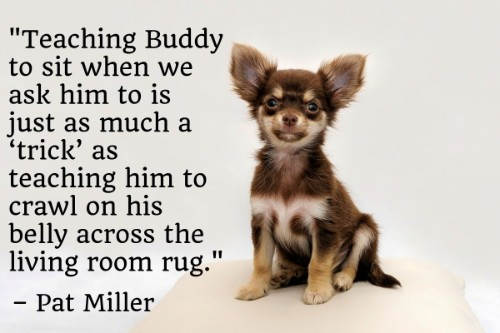 """""""Teaching Buddy to sit when we ask him to is just as much a 'trick' as teaching him to crawl on his belly across the living room rug."""" - Pat Miller"""