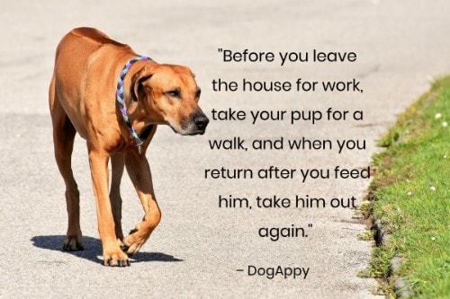 """""""Before you leave the house for work, take your pup for a walk, and when you return after you feed him, take him out again."""" - DogAppy"""