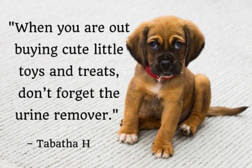 """""""When you are out buying cute little toys and treats, don't forget the urine remover."""" - Tabatha H"""