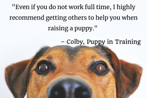 """""""Even if you do not work full time, I highly recommend getting others to help you when raising a puppy."""" - Colby, Puppy in Training"""