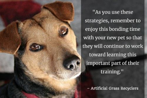 """""""As you use these strategies, remember to enjoy this bonding time with your new pet so that they will continue to work toward learning this important part of their training."""" - Artificial Grass Recyclers"""