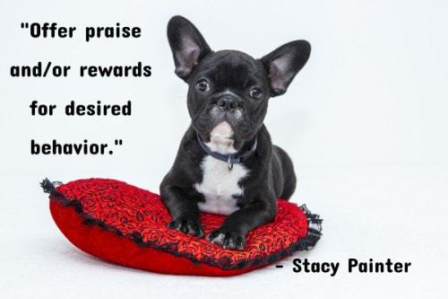 """""""Offer praise and/or rewards for desired behavior."""" - Stacy Painter"""