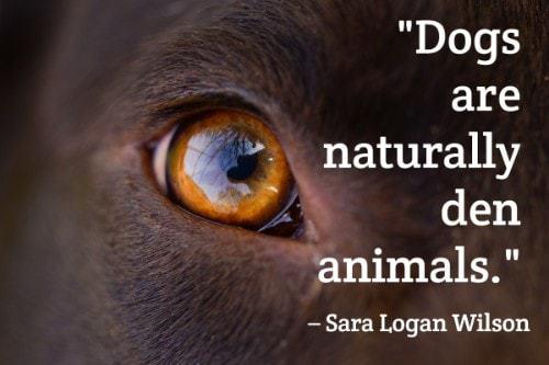 """Dogs are naturally den animals."" - Sara Logan Wilson"