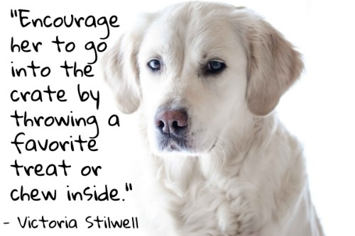 """""""Encourage her to go into the crate by throwing a favorite treat or chew inside."""" - Victoria Stilwell"""