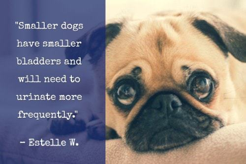 """""""Smaller dogs have smaller bladders and will need to urinate more frequently."""" -Estelle W."""