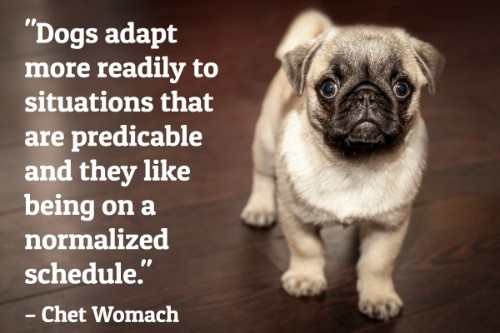 """""""Dogs adapt more readily to situations that are predicable and they like being on a normalized schedule.""""-Chet Womach"""