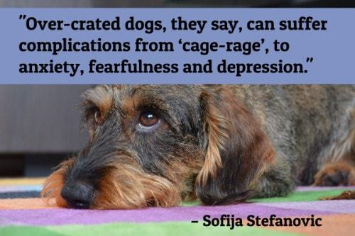 """""""Over-crated dogs, they say, can suffer complications from 'cage-rage', to anxiety, fearfulness and depression.""""-Sofija Stefanovic"""