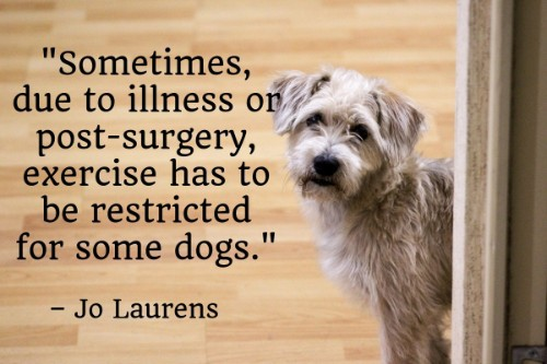 """""""Sometimes, due to illness or post-surgery, exercise has to be restricted for some dogs.""""-Jo Laurens"""