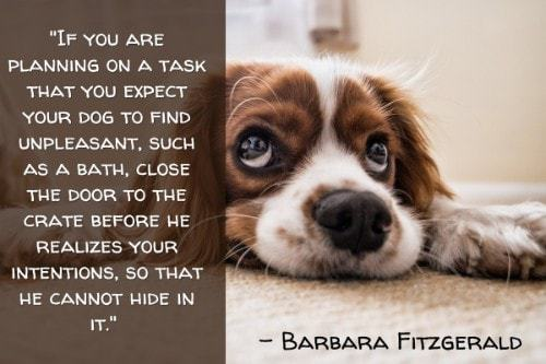 """""""If you are planning on a task that you expect your dog to find unpleasant, such as a bath, close the door to the crate before he realizes your intentions, so that he cannot hide in it."""" - Barbara Fitzgerald"""