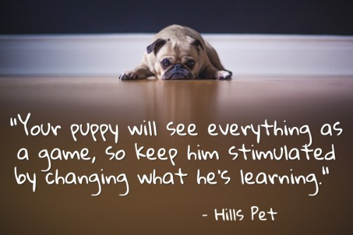 """""""Your puppy will see everything as a game, so keep him stimulated by changing what he's learning. Do each command for about five minutes and come back to it whenever you can."""" - Hills Pet"""