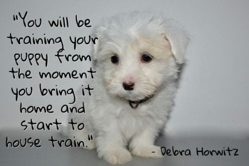 """""""You will be training your puppy from the moment you bring it home and start to house train."""" - Debra Horwitz"""